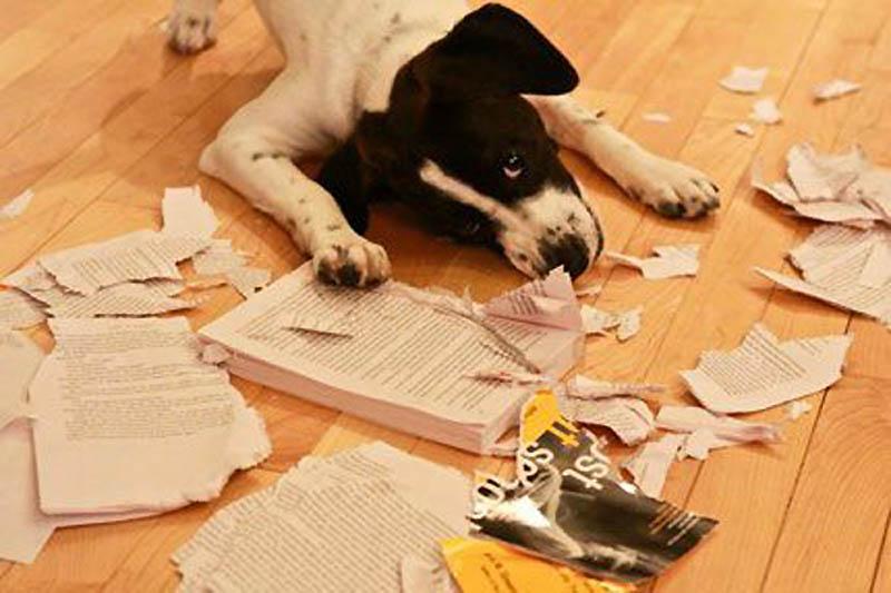 3513 Почему кошки лучше собак
