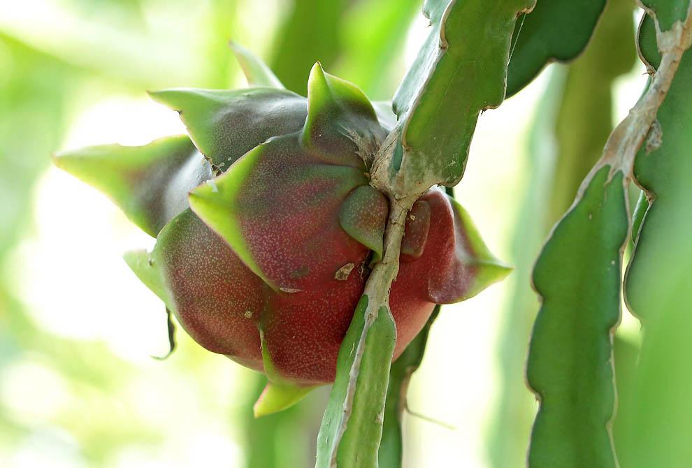 374 Экзотические фрукты