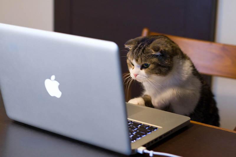 3812 Почему кошки лучше собак