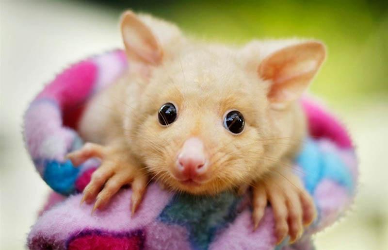 405 Умилительные экзотичные зверята малыши