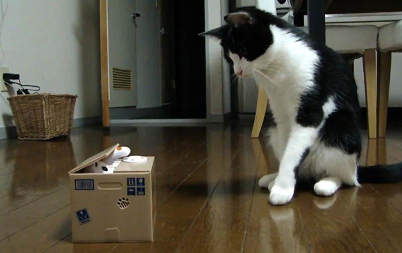 4101 Почему кошки лучше собак