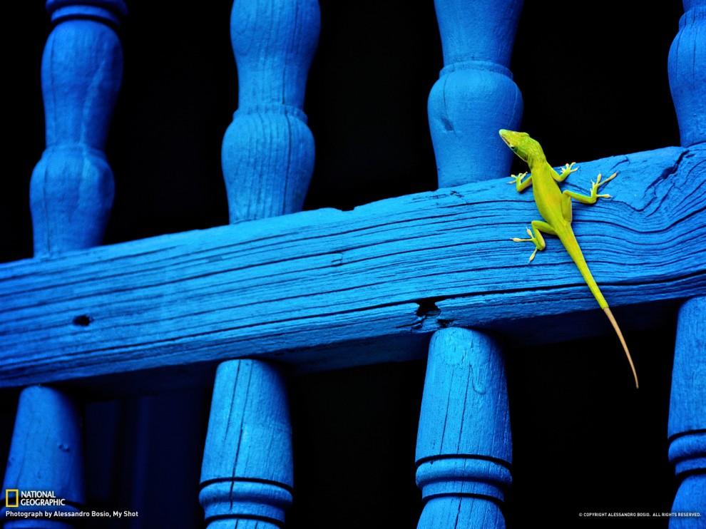 414 990x742 Обои для рабочего стола от National Geographic за июль 2012