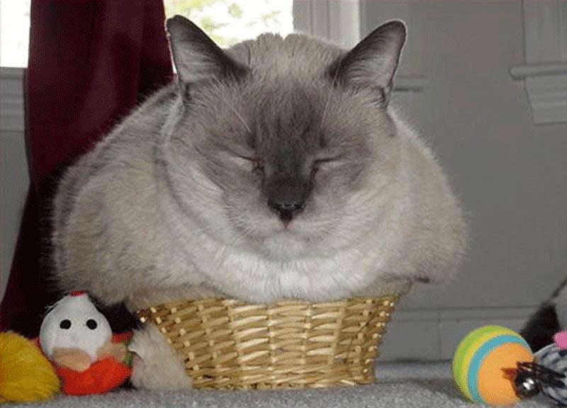 420 Идеальные места для отдыха   версия для котов