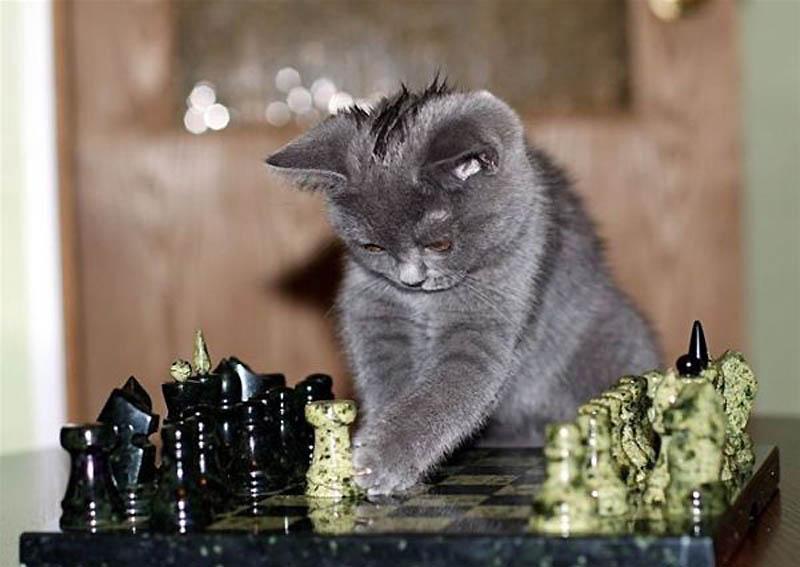 4314 Почему кошки лучше собак