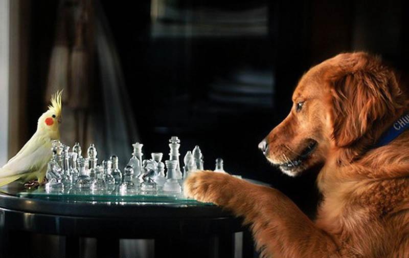 4413 Почему кошки лучше собак