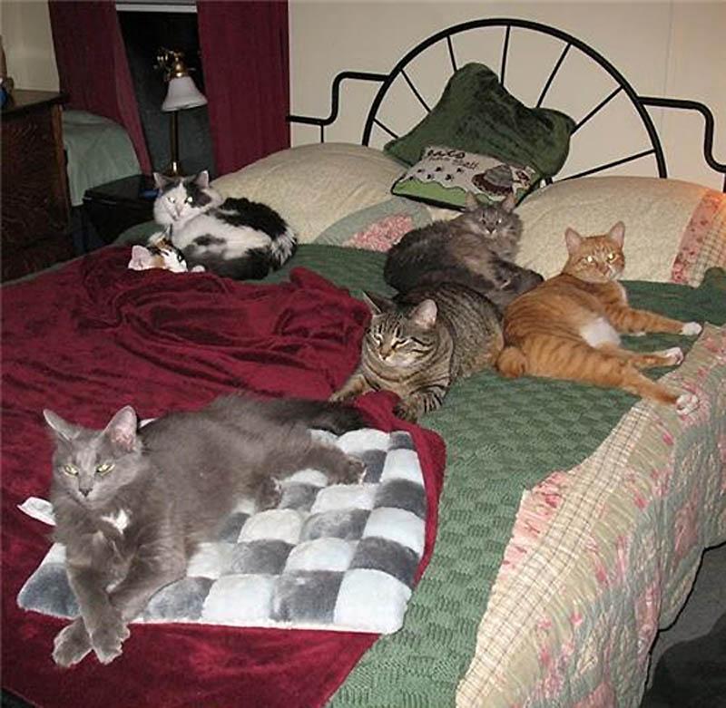 4513 Почему кошки лучше собак