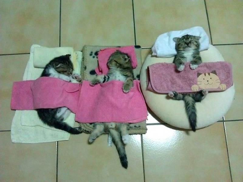 4711 Почему кошки лучше собак