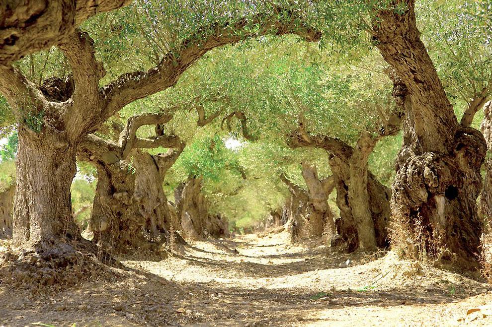 479 Лесные пейзажи Ларса Ван де Гур