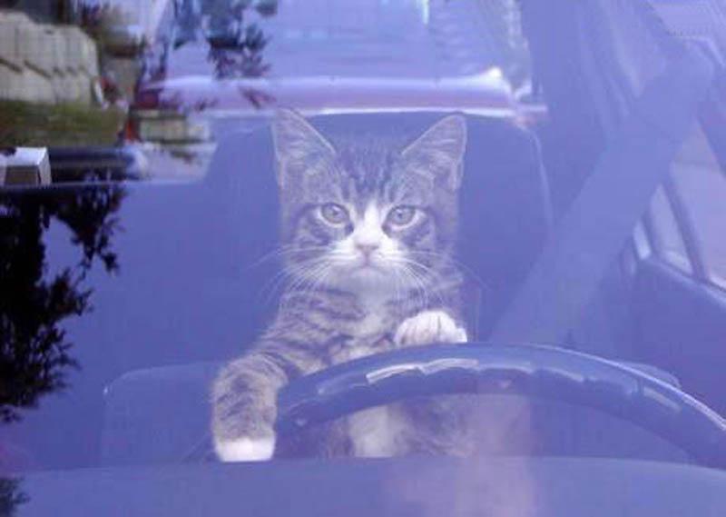 4811 Почему кошки лучше собак