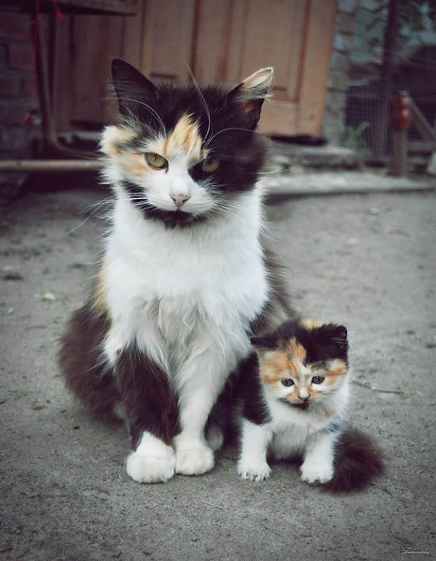 483 Детские двойники взрослых животных