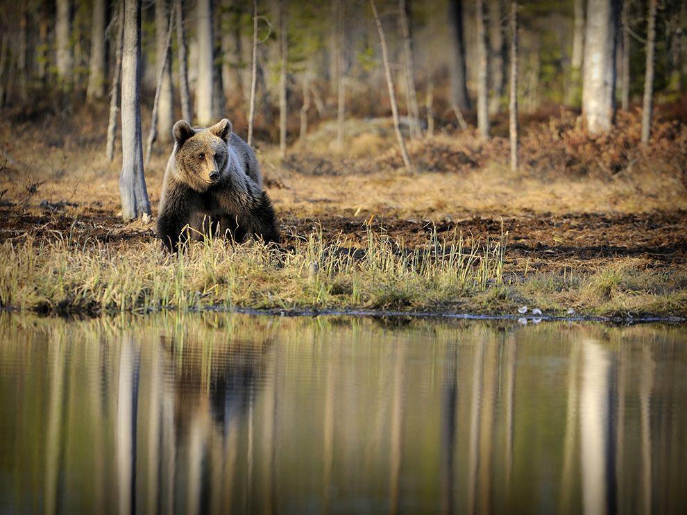 514 Обои для рабочего стола от National Geographic за июль 2012