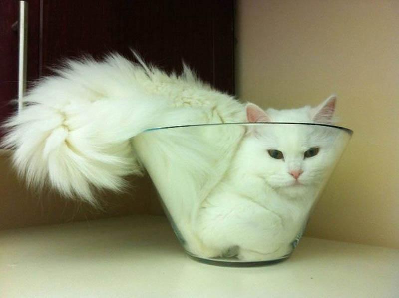 520 Идеальные места для отдыха   версия для котов