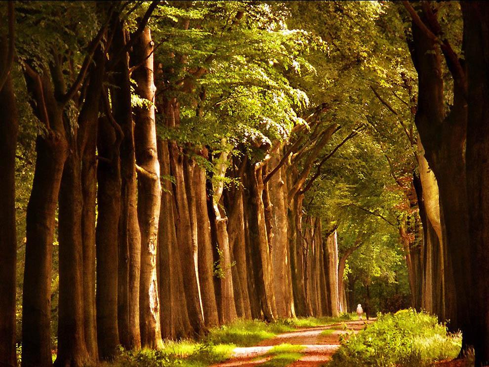 568 Лесные пейзажи Ларса Ван де Гур