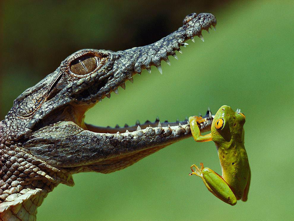 589 21 фото от National Geographic
