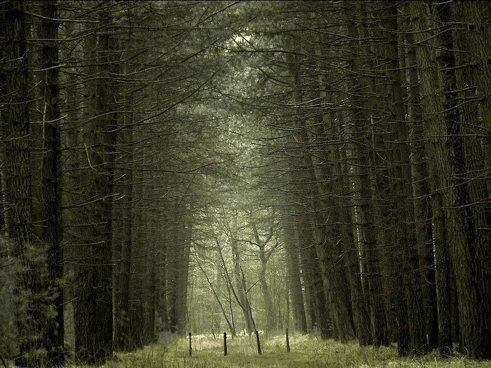 668 Лесные пейзажи Ларса Ван де Гур
