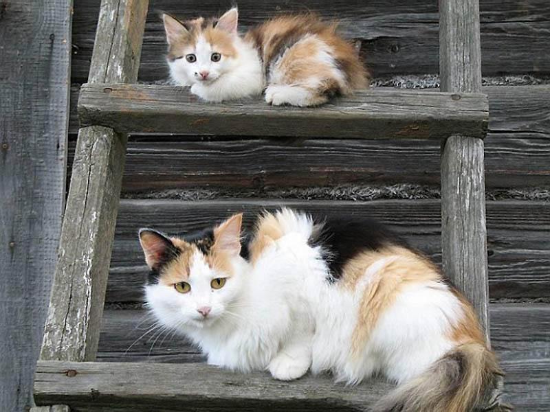 670 Детские двойники взрослых животных