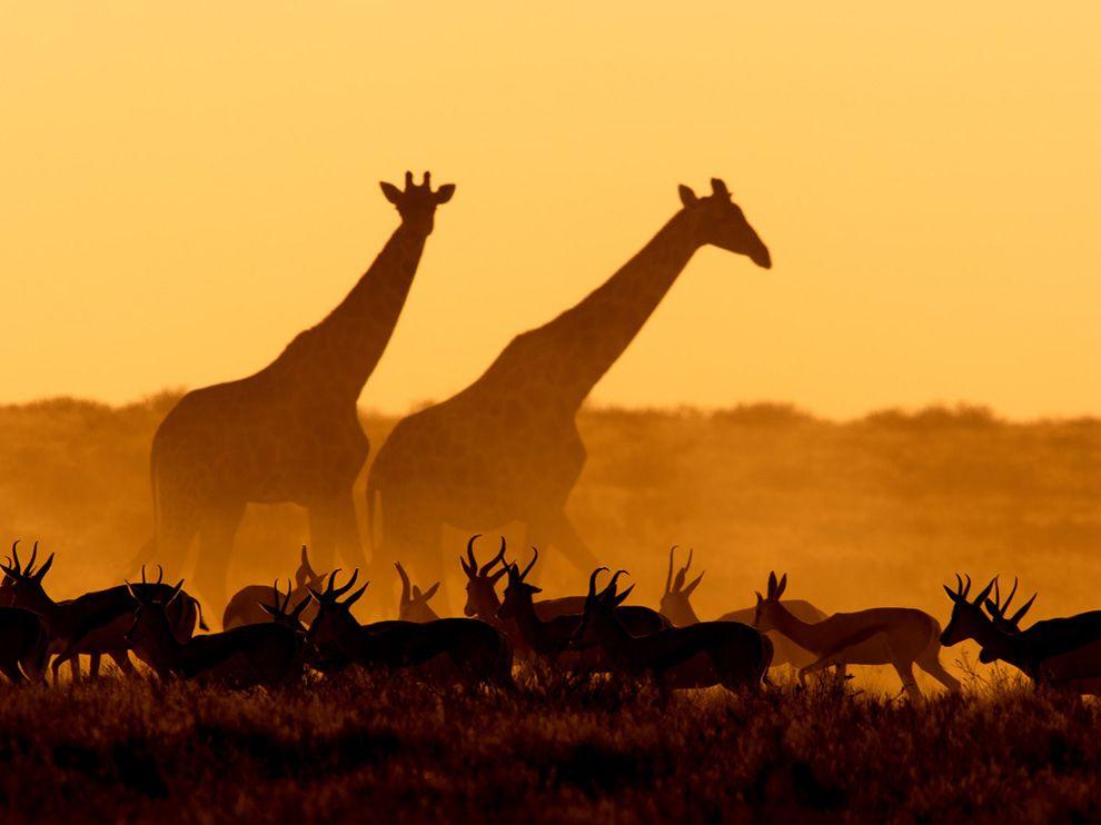 714 Обои для рабочего стола от National Geographic за июль 2012