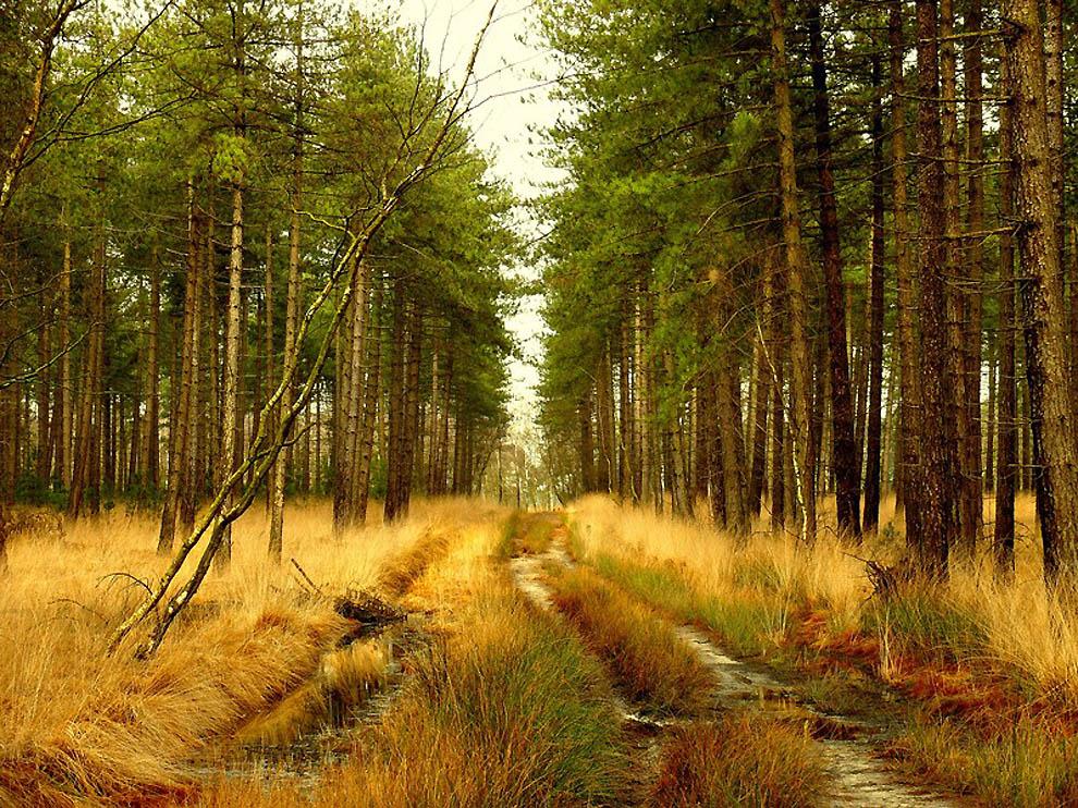 763 Лесные пейзажи Ларса Ван де Гур