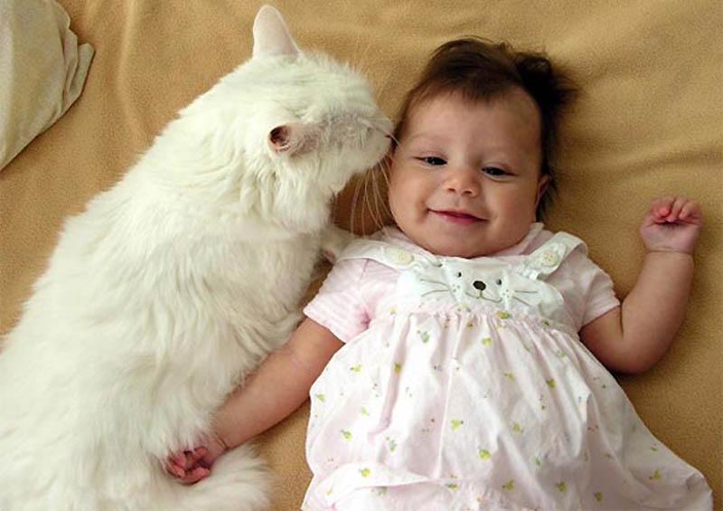 779 Почему кошки лучше собак
