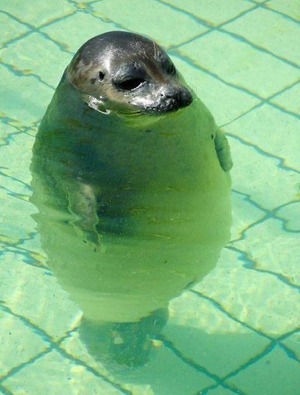 793 Животные с лишним весом