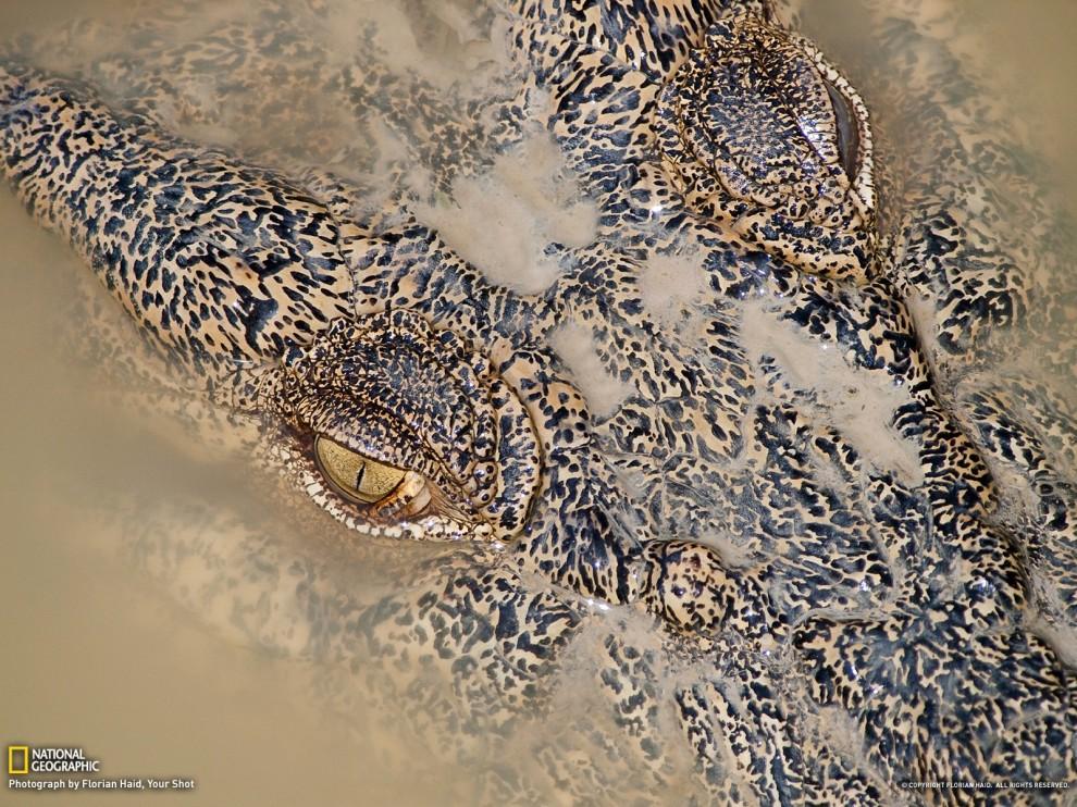 813 990x742 Обои для рабочего стола от National Geographic за июль 2012