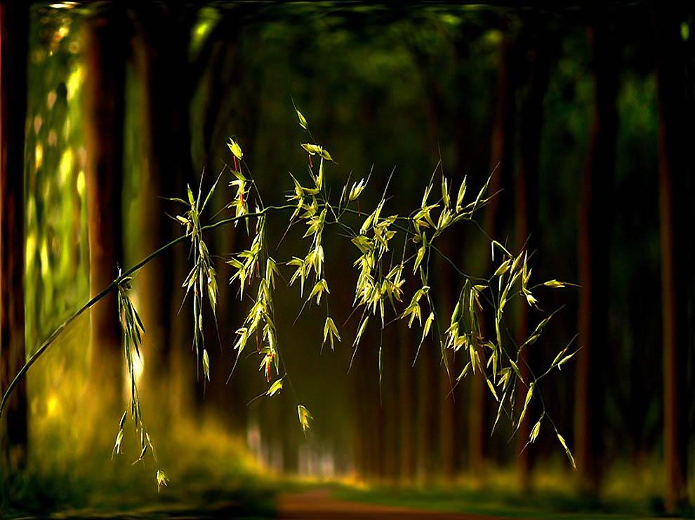 862 Лесные пейзажи Ларса Ван де Гур