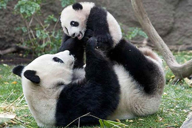 864 Детские двойники взрослых животных