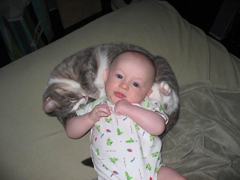878 Почему кошки лучше собак