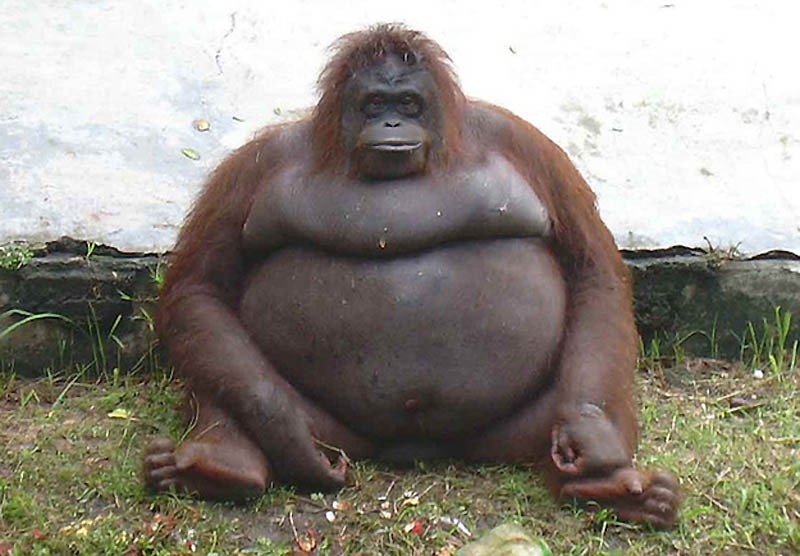 892 Животные с лишним весом