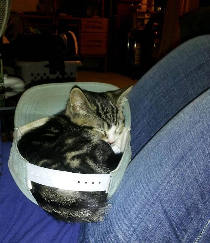 919 Идеальные места для отдыха   версия для котов