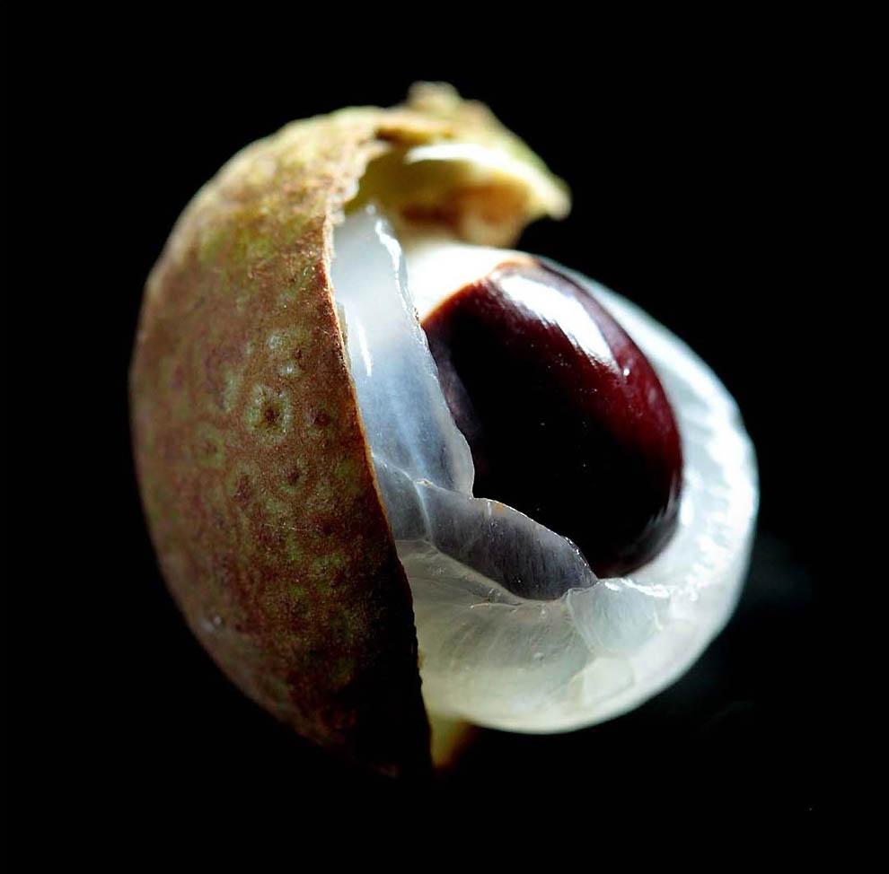 932 Экзотические фрукты