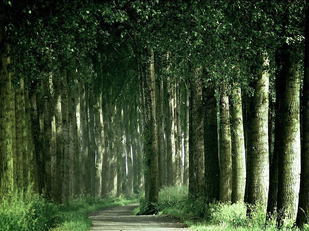 960 Лесные пейзажи Ларса Ван де Гур