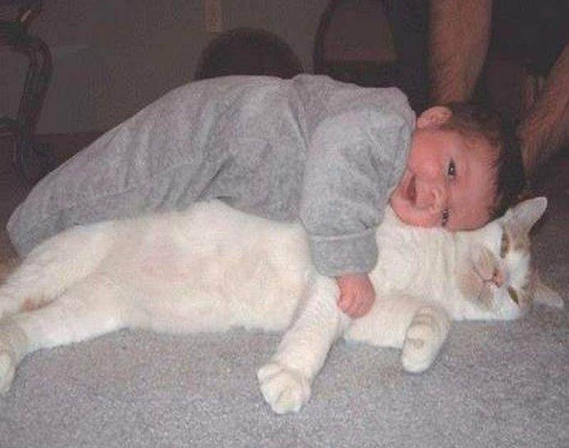 975 Почему кошки лучше собак