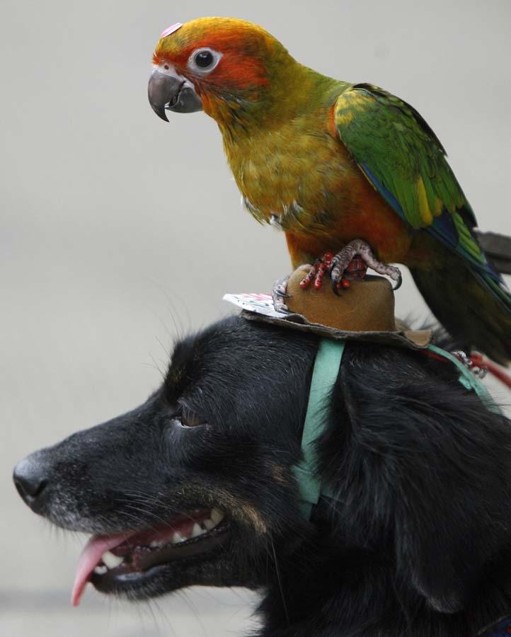 AnimalOddCouples 23 Самые странные парочки животных