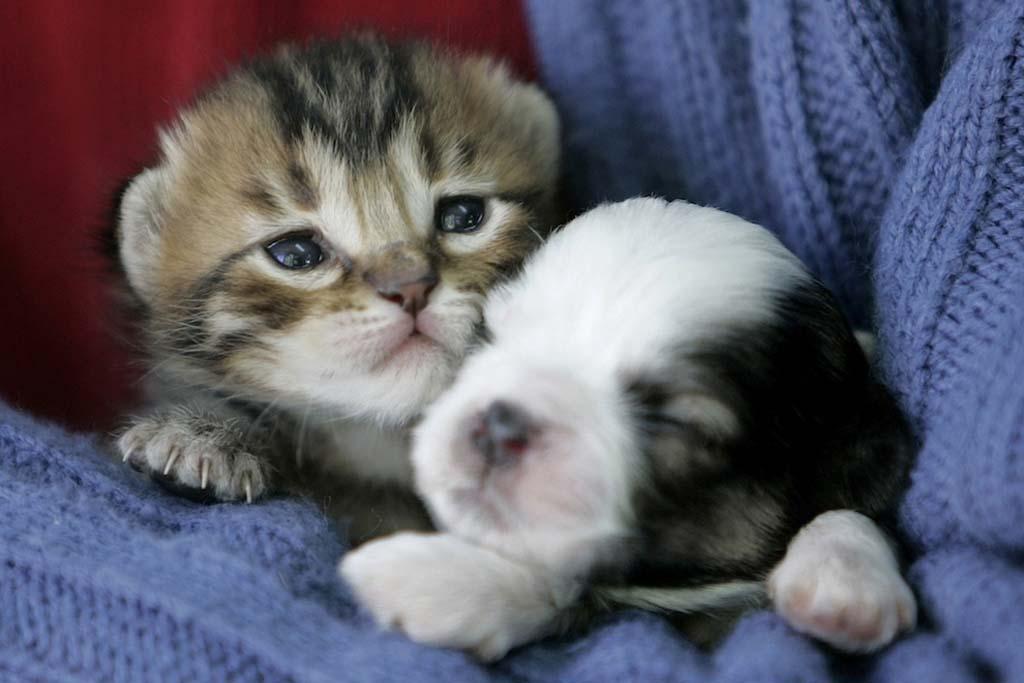 AnimalOddCouples 25 Самые странные парочки животных