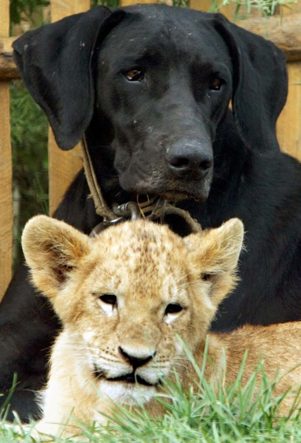 AnimalOddCouples 29 Самые странные парочки животных