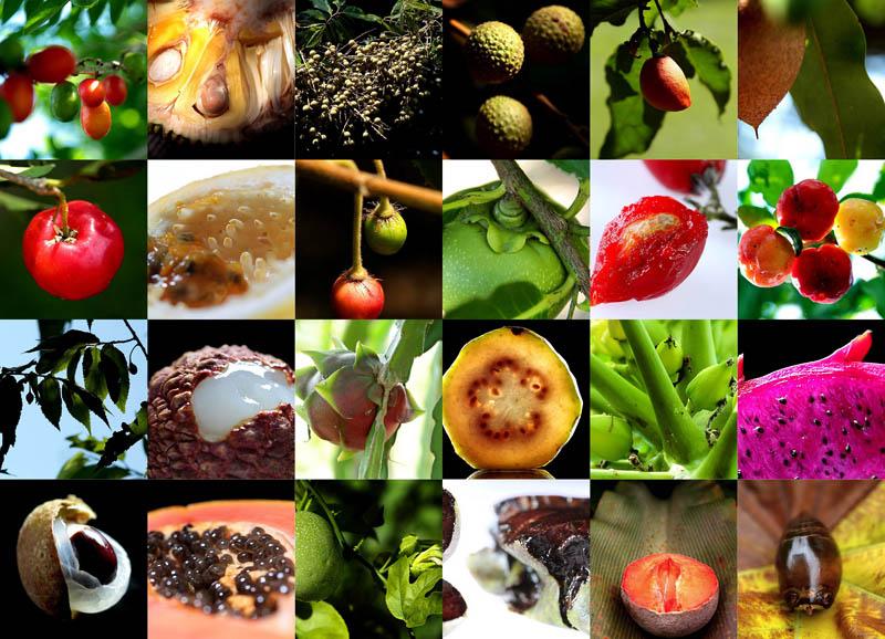 BIGPIC13 Экзотические фрукты
