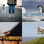 Животные – мастера левитации