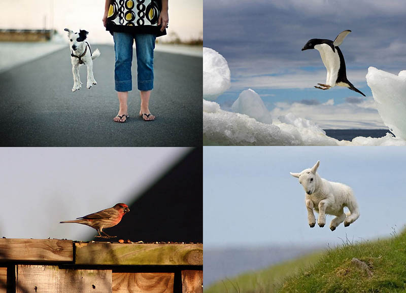 BIGPIC223 Животные   мастера левитации