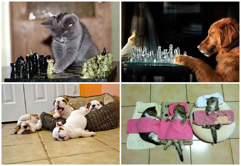 BIGPIC224 Почему кошки лучше собак