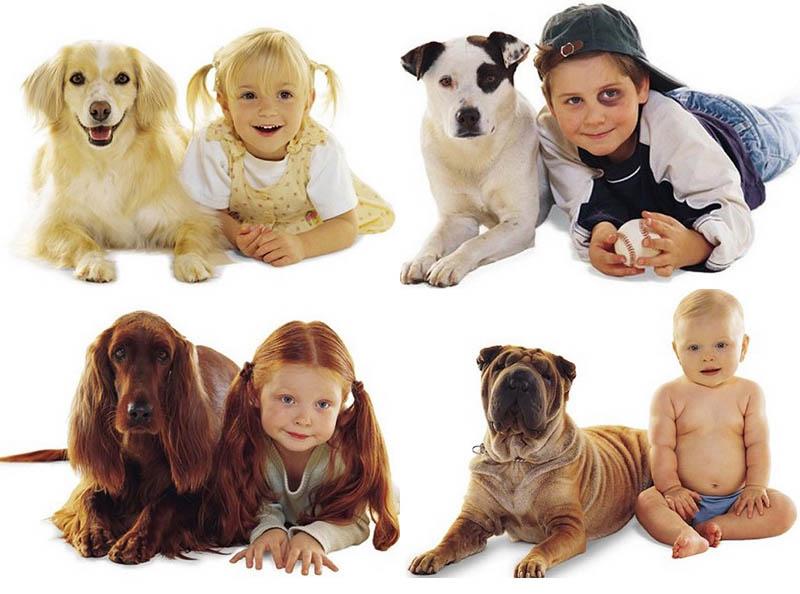 BIGPIC42 Дети и собаки
