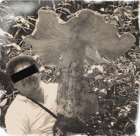 Всемирный грибной заговор