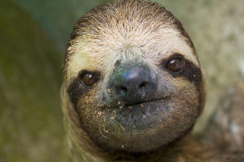 SLOTH01 Заказник ленивцев в Коста Рике