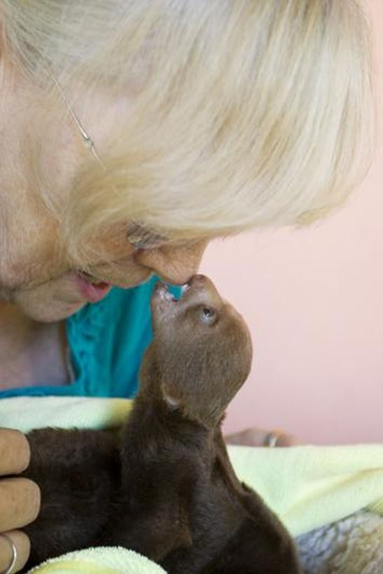SLOTH07 Заказник ленивцев в Коста Рике