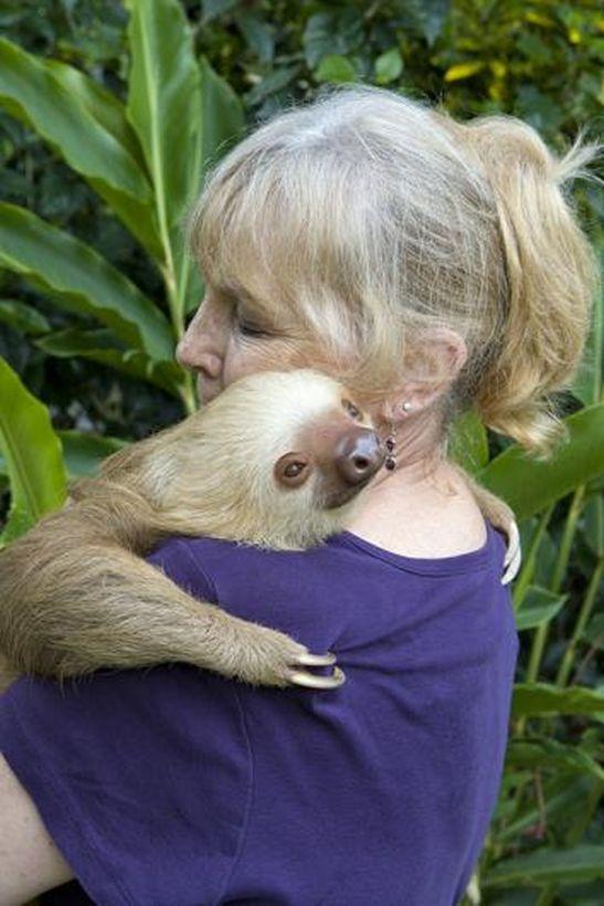 SLOTH08 Заказник ленивцев в Коста Рике