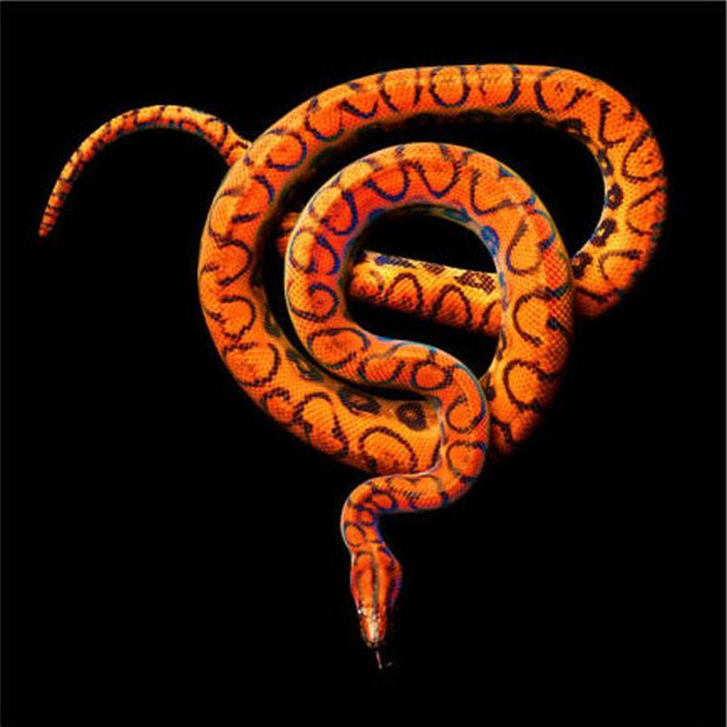 Serpentine08.jpg