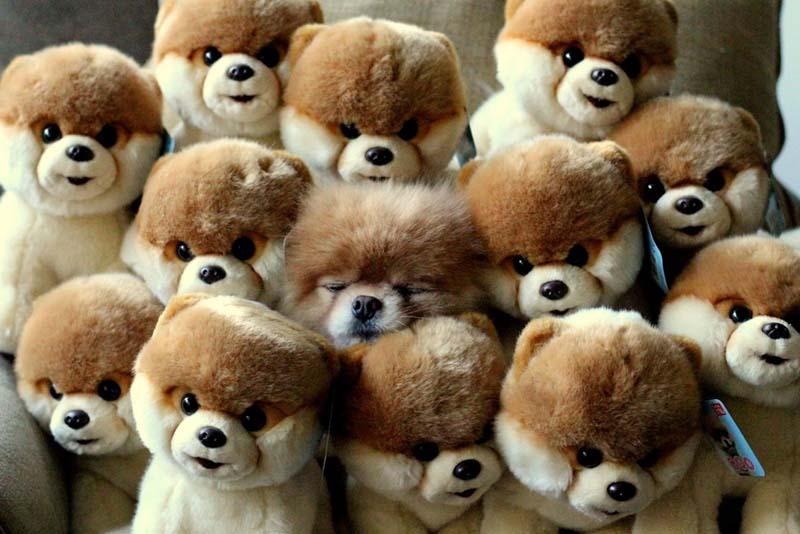 cute 15 Самые мимимишные зверушки из тех, что вы видели