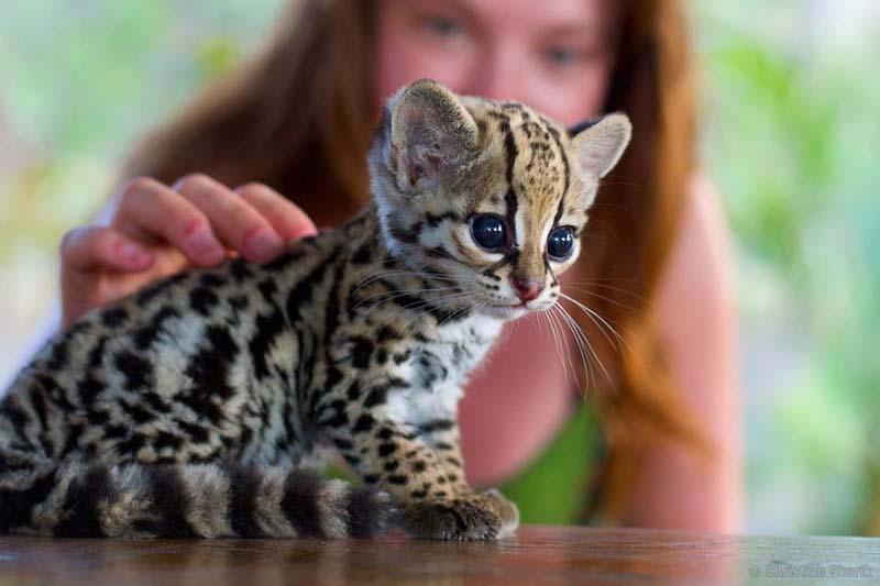 cute 54 Самые мимимишные зверушки из тех, что вы видели