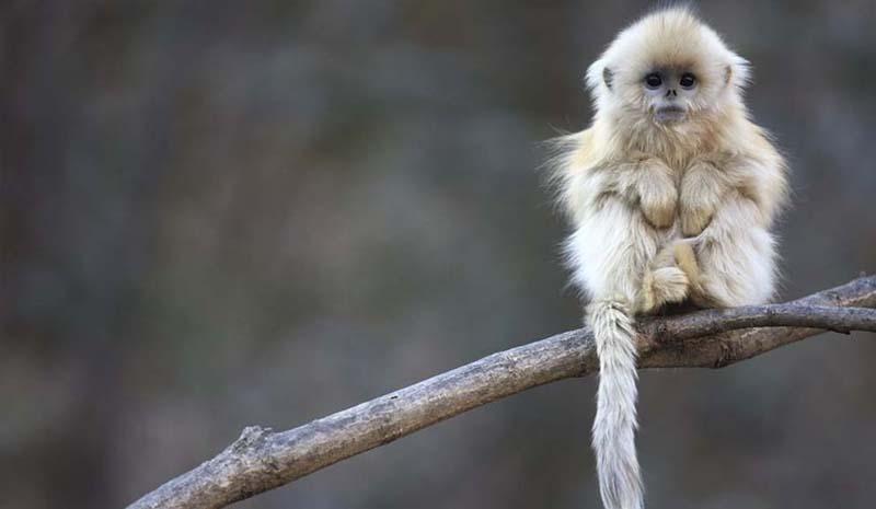 cute 55 Самые мимимишные зверушки из тех, что вы видели