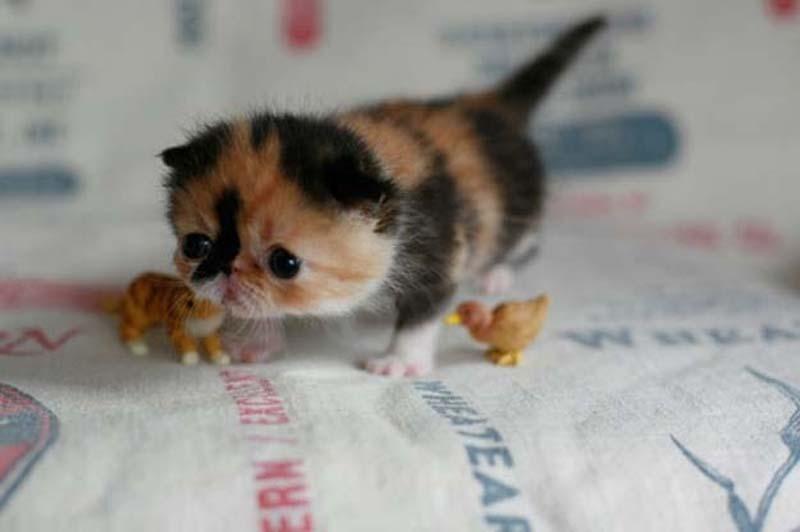 cute 70 Самые мимимишные зверушки из тех, что вы видели